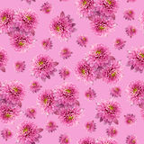 Seamless infinite pink floral background. For design and printing. Background of natural chrysanthemums. Royalty Free Stock Photo