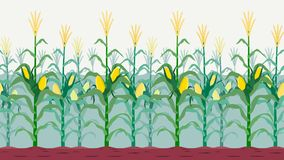 Seamless isolated cornfield Royalty Free Stock Images