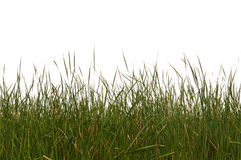 Seamless Isolated Grass Royalty Free Stock Image