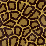 Seamless jaguar or leopard fur texture Royalty Free Stock Images