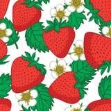 seamless jordgubbar för modell Vektortexturdesign Royaltyfri Foto