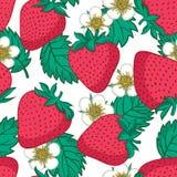 seamless jordgubbar för modell Vektortexturdesign Arkivbild