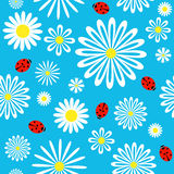 Seamless ladybird chamomile pattern. Vector background Royalty Free Stock Photos