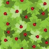 Seamless Ladybug Tile Stock Image