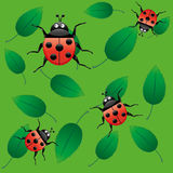 Seamless ladybugs Stock Photos