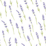 Seamless lavender pattern. Seamless pattern with hand drawn lavender flowers . Hand drawn design for Thank you card, Greeting card or Invitation. Vector Stock Image