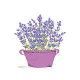 Seamless lavender pattern. Hand drawn lavender flowers in vintage pot . Hand drawn design for Thank you card, Greeting card or Invitation. Vector illustration Stock Photo