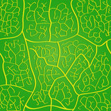 Seamless leaf pattern Stock Images