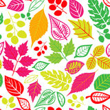 Seamless leaf pattern.Leaf background. Autumn seamless pattern. Royalty Free Stock Image