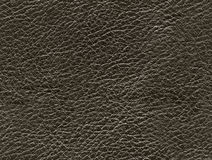 Seamless leather texture Stock Images