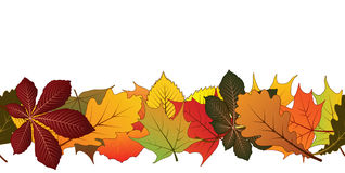 Seamless leaves Royalty Free Stock Photography
