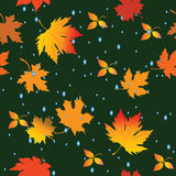 Seamless leaves. Seamless pattern with leaves and raindrops. Vector illustration Royalty Free Stock Photography