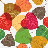 Seamless leaves background, colorful design elements isolated on white background Royalty Free Stock Photography
