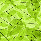 Seamless leaves background Stock Images