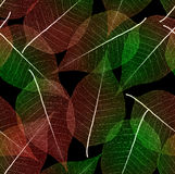 Seamless leaves background Stock Image