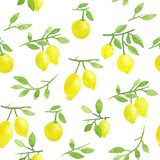 Seamless Lemon Pattern. Watercolor hand painted lemons on white background. Hand painted watercolor lemons seamless pattern. Citrus ripe fruits on branches with stock illustration