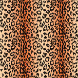 Seamless leopard background Stock Images