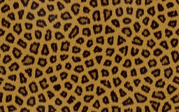 Seamless leopard skin pattern. Stock Photos