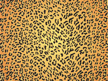 Seamless leopard skin pattern fur Stock Image