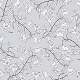 seamless liljamodell Royaltyfri Fotografi