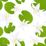 Seamless lily isolated background Royalty Free Stock Photo