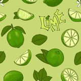 Seamless color pattern of lime. Vector symbols in sketch style. royalty free illustration