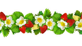Seamless line pattern with strawberry flowers, berries and lea Stock Images