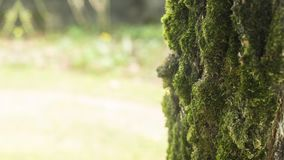 Seamless Loop Slide Over Tree Bark And Grass. Slide over background of grass in the sun and close up shots of tree bark, on a seamless loop cycle stock video footage