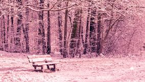 Seamless loop - Snowing on a bench in a forest, winter scene stock video footage