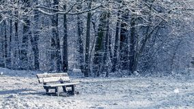 Seamless loop - snowing on a bench in a forest in winter, video HD. Seamless loop - snowing on a bench in a forest, winter scene, video HD stock video