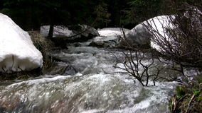 (Seamless Loop) Snowmelt Creek Overflowing Banks. The mountain snowmelt overflows the banks of the creek and a centered bush moves in the strong current stock video footage