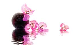 Seamless loop - Zen Bougainvillea composition, water reflections, HD video stock footage
