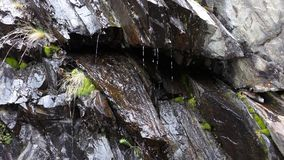 Seamless looping footage of water trickling down along a dark rock face with green moss. Background decorative video or illustrati. On for nature and environment stock video