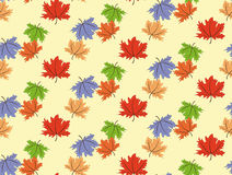 Seamless maple leaf Stock Images