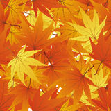 Seamless maple leaves Royalty Free Stock Photography