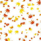 Seamless maple leaves Stock Image