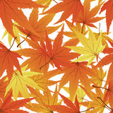 Seamless maple leaves Royalty Free Stock Photos