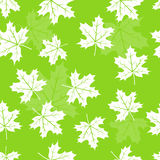 Seamless maple leaves pattern Royalty Free Stock Image