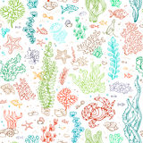 Seamless marine pattern. Vector illustration. Various colourful shell, algae, fish, starfish, bottle with a letter, key on white background Stock Image