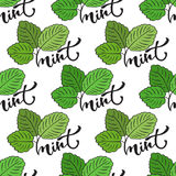 Seamless mint leaf pattern. Vector print for healthy product packaging design. Or surface texture vector illustration