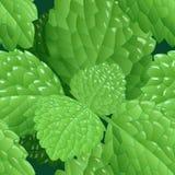 Seamless mint pattern Stock Photography