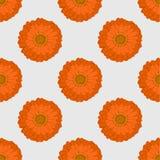 seamless modell Den orange blomman Gerbera Fotografering för Bildbyråer