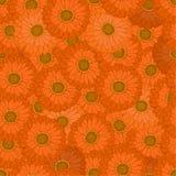 seamless modell Den orange blomman Gerbera Arkivfoto