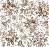 seamless modell Realistiska isolerade blommor för prydnadpapper för bakgrund geometrisk gammal tappning KamomillRose Petunia vild royaltyfria foton