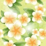 Seamless modell - vita frangipaniblommor Royaltyfri Bild