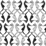 Seamless monochrome background with seahorses. Stock Image
