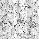 Seamless monochrome  pattern from orchids Royalty Free Stock Image
