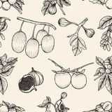 Seamless monochrome pattern. Set of fruits with leaves, seamless monochrome pattern, hand drawn Stock Photography