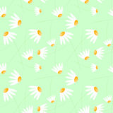 Seamless morning daisies. Morning daisies with light green background. Seamless Tile Royalty Free Stock Image