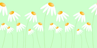 Seamless morning daisies strip. Morning daisies with light green background. Seamless bar Stock Images